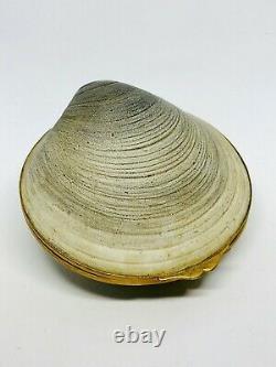 Rare & Vintage Limoges Piotet Large Oyster Shell Trinket Box